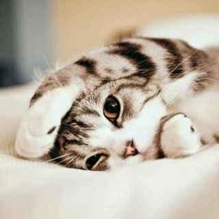 动物起床早安图片