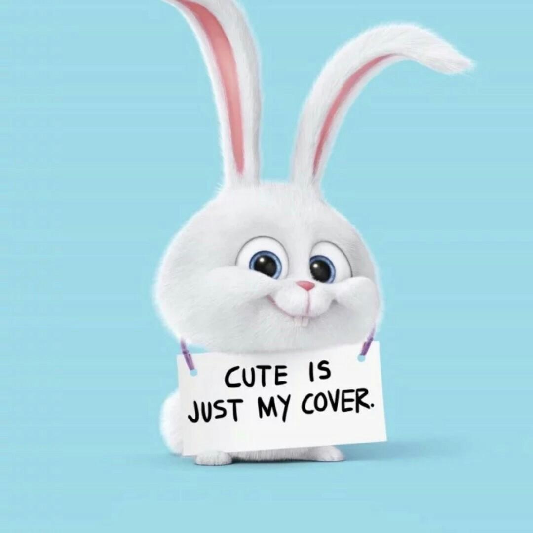 小兔叽qwq
