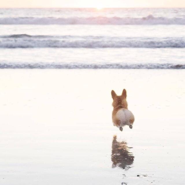 跳的过兔子
