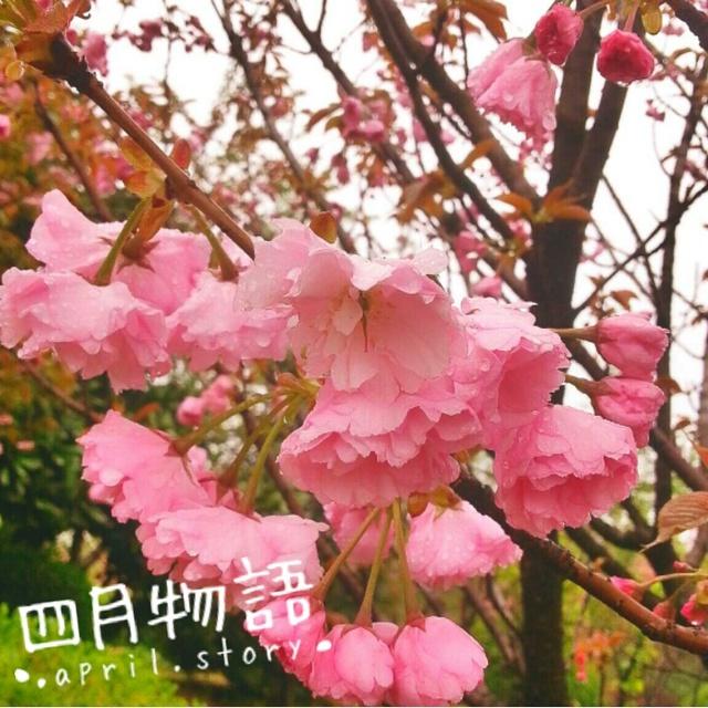 AllenTeng的照片