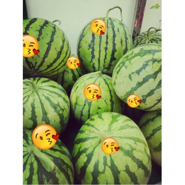 这个夏天 我只想和西瓜在一起