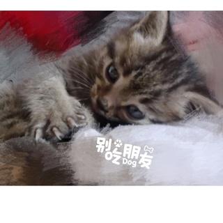 大头宝宝男's photos