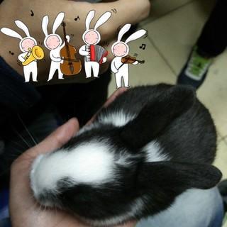 萌宠,兔兔,可爱死了