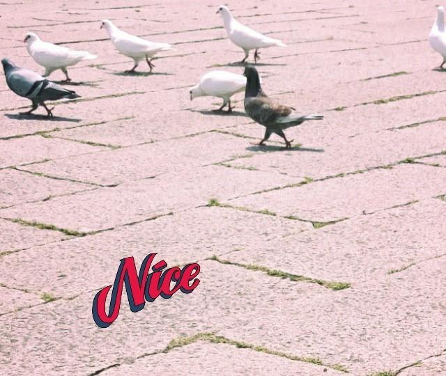 Alice雁玲的照片