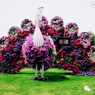 pusat976946's photos