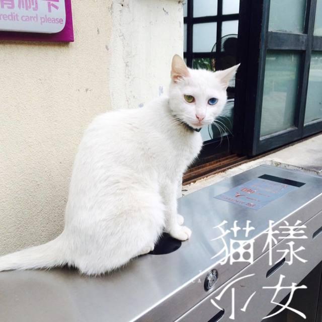 鐘文華Hua的照片