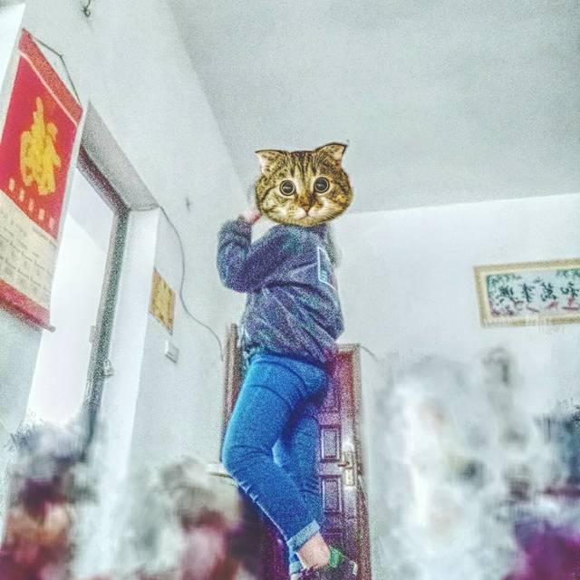🙋单身猫💓