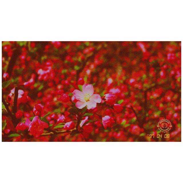 未闻花名,微距,photography,大宁灵石公园,nice摄影