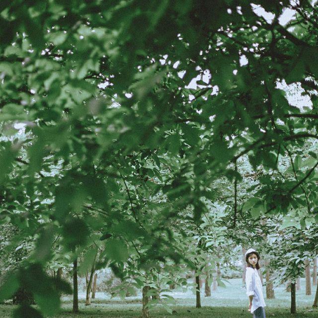 ---言西早---的照片 一抹绿色,珠海,服装拍摄