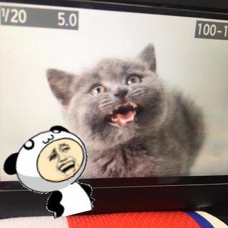Cici茜仪's photos