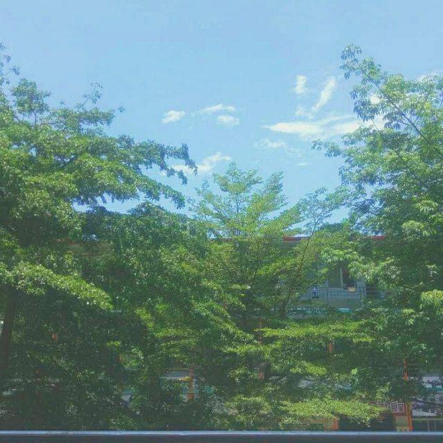 AAiiiiA的照片 蓝天白云绿树,喜欢请点赞