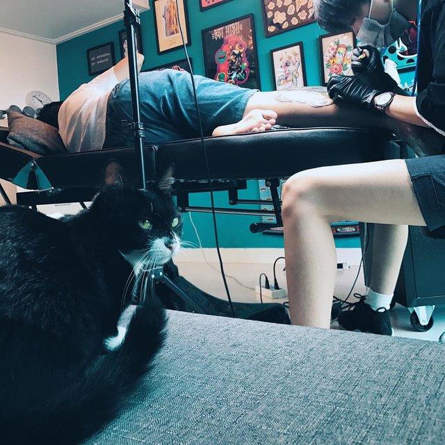 妹妹,大boss,黑猫,tattoo,工作照