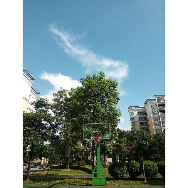 绿树,篮球场,喜欢请点赞💕,天很蓝