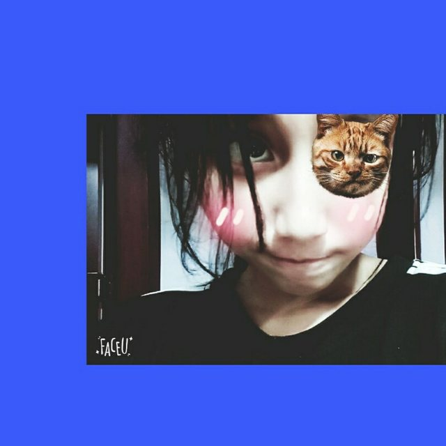 猫子L的照片