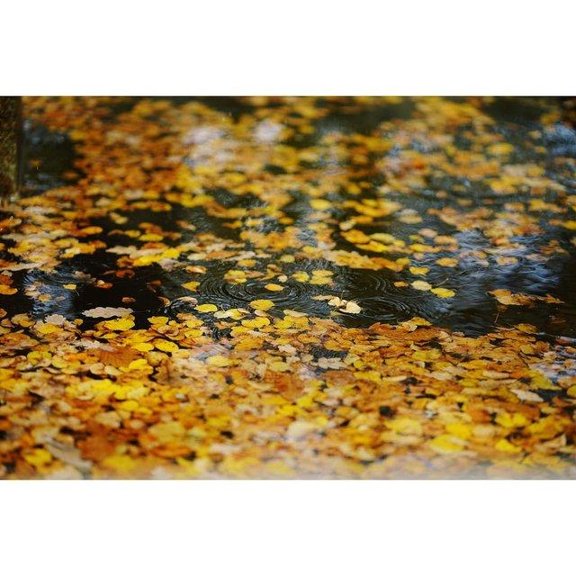 nice摄影,秋冬,满地落叶,你好