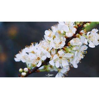 _Ayase醬啊's photos