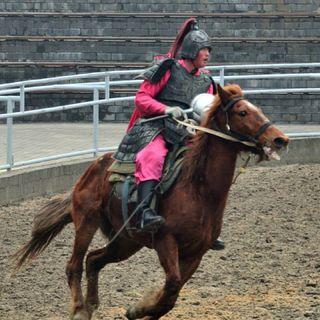 可爱的马的照片