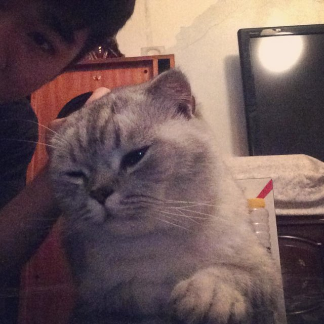 Tom咪的照片
