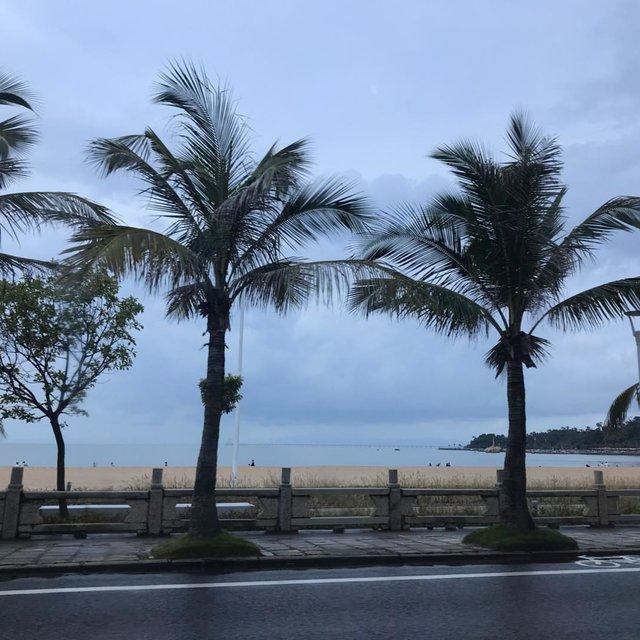珠海市,树,海