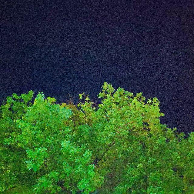 我用摄影看世界,绿色控,树
