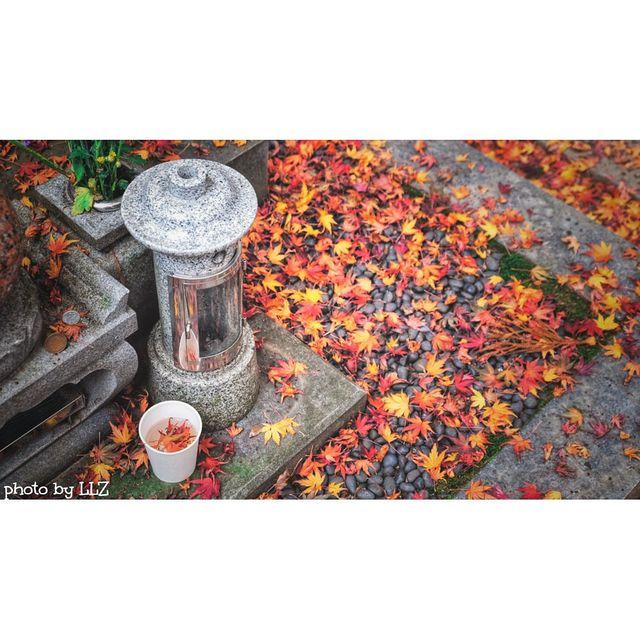 我用摄影看世界,爱摄影,nice摄影,秋天,红叶