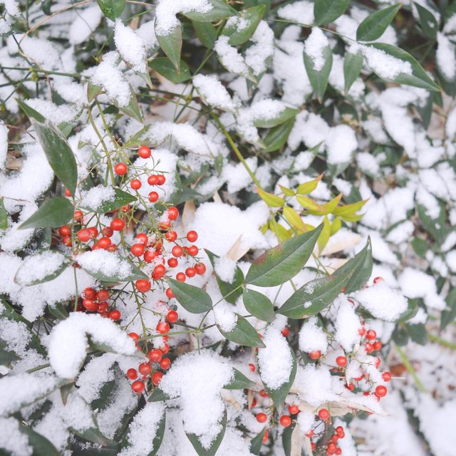 nice生活,下雪天,爱摄影