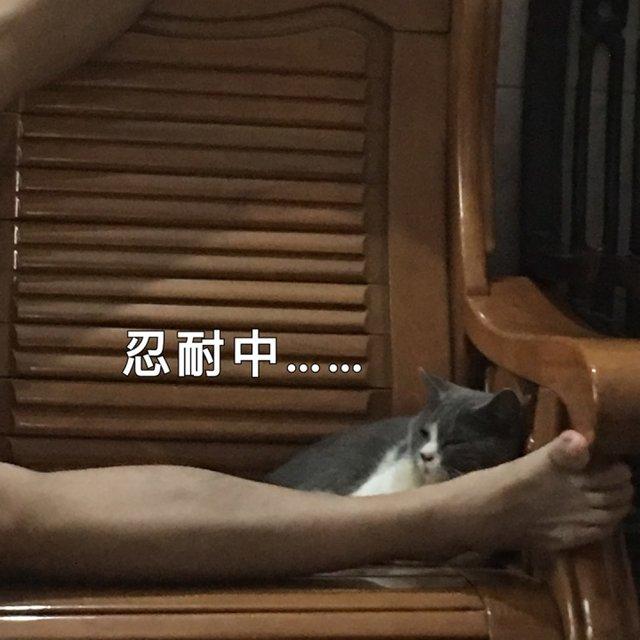 养英短的刘浩荣的照片