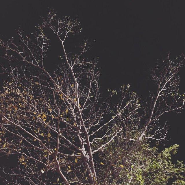 树,植物,珠海市,再见