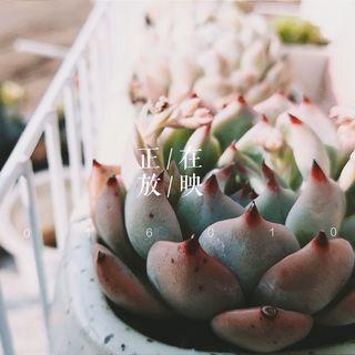 圆子-YuanZi's photos