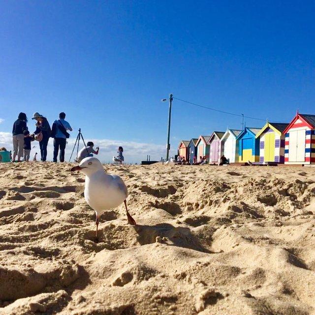 旅行是我的解药,Brighton beach, Melbourne,VICTORIA,孤单南半球,以貌取人,今天穿这样