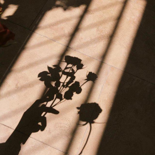 光与影,植物,影子