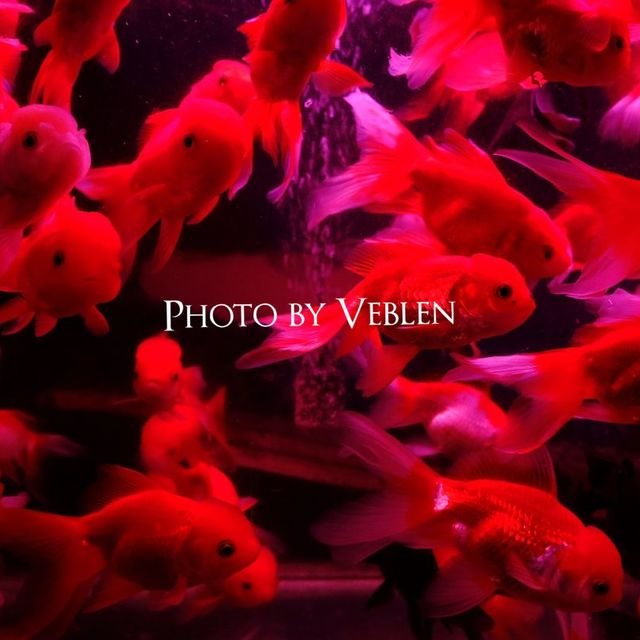-Veblen-的照片