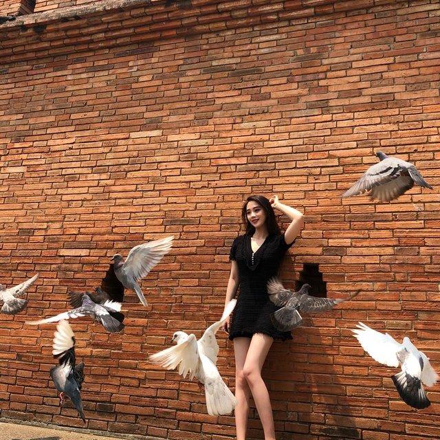 鸽子,#,清迈,✨