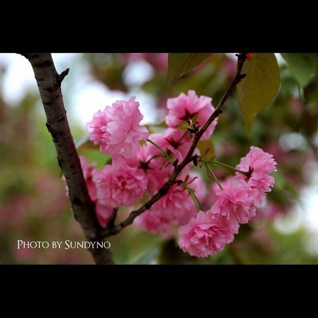 我用摄影看世界,旅行是我的解药,风景这边独好,春天的颜色,nice摄影