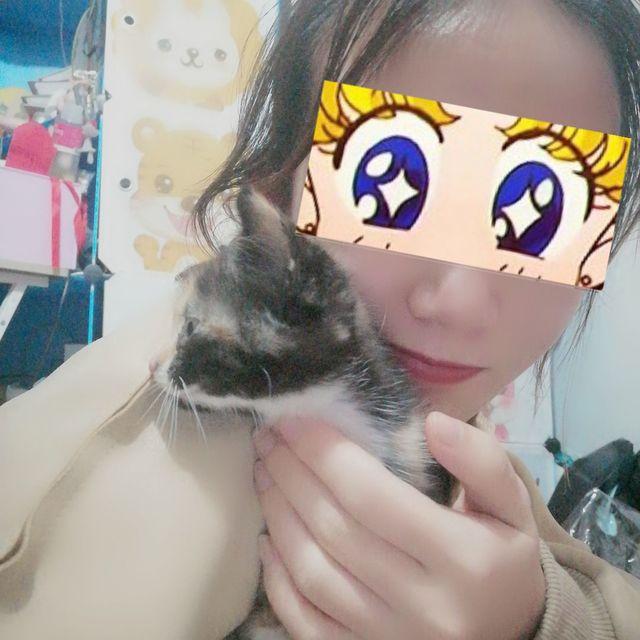 小猫咪,hello,喵星人来袭,江门市,珠珠🐷