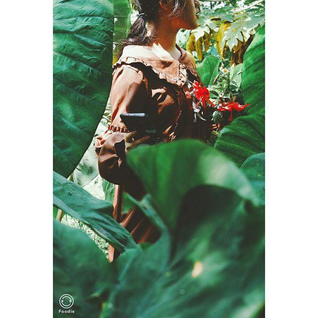 miao叔,植物,绿叶,珠海市,微单摄影