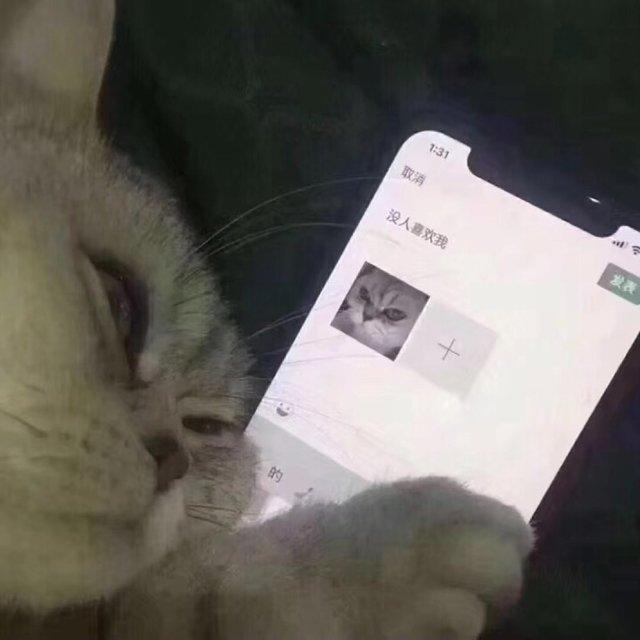 绿我求你了的照片