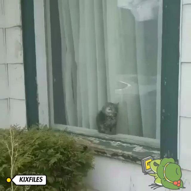 KIXFILES的照片