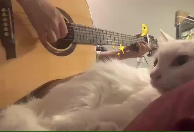 猫猫的傻猪唛的照片